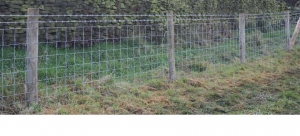 livestock netting fencing 300x136 - livestock-netting-fencing