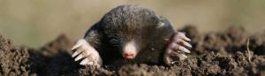 moles 300x86 - moles