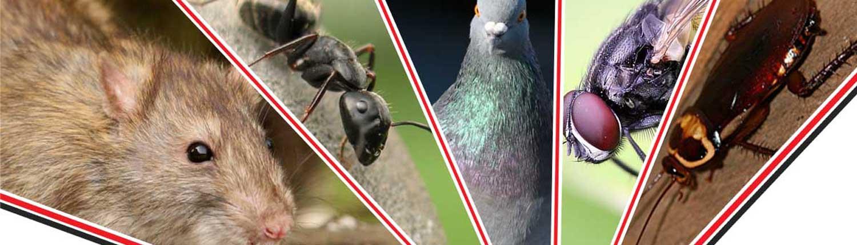 pest-control-cheshire