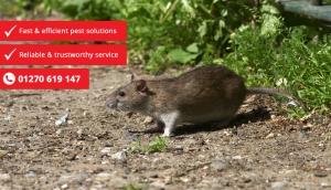 rat control tablet 300x172 - rat-control-tablet