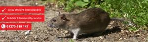 rodent control caption 300x86 - rodent-control-caption